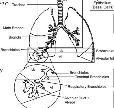 information in biological respiratory sedimentation